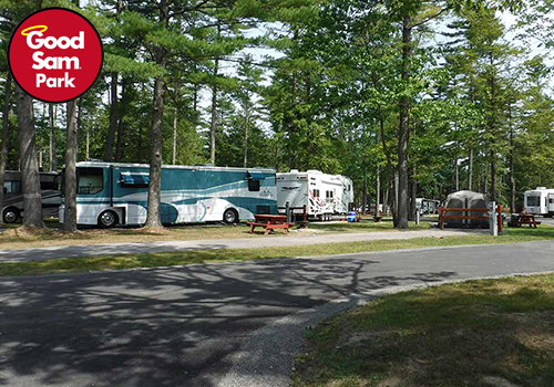 Motorhomes and trailers parked under the shade of tall pine trees.