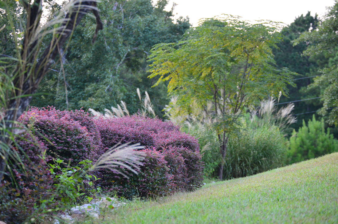 A grassy slope leading to random flowers and trees.