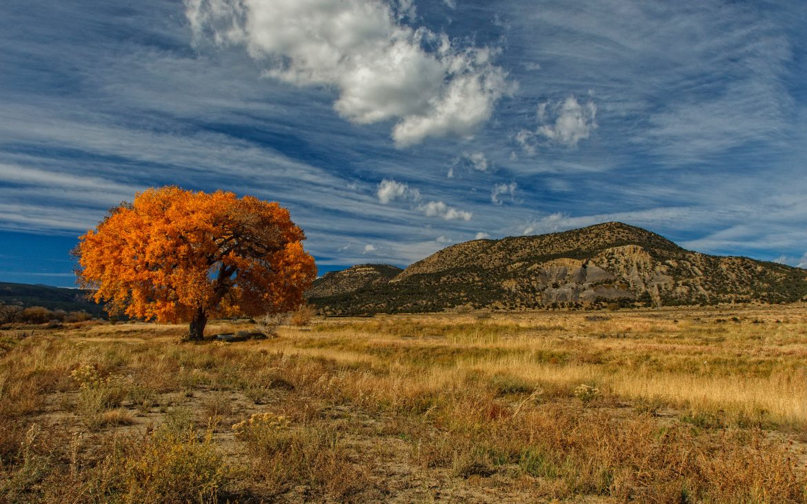 Loan orange leaf full tree in valley of Taos on blue sky cloudy day