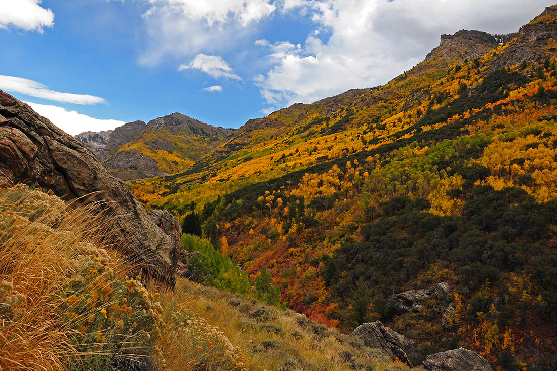 Fall colors of gold and yellow cover a rugged canyon, making it a great sleepy fall rv destination