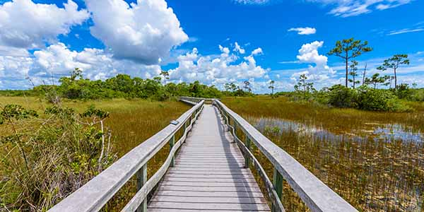 Wooden bridge walkway over marsh