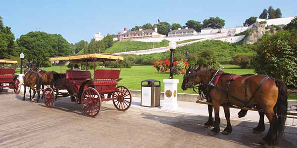 Horse drawn carriages and horses