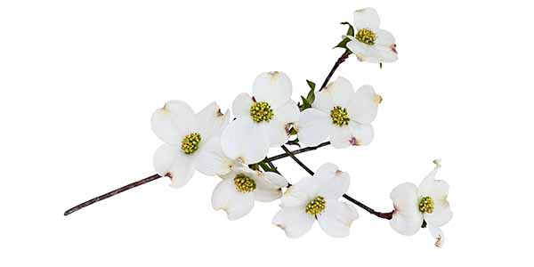Small white flowers on a branch