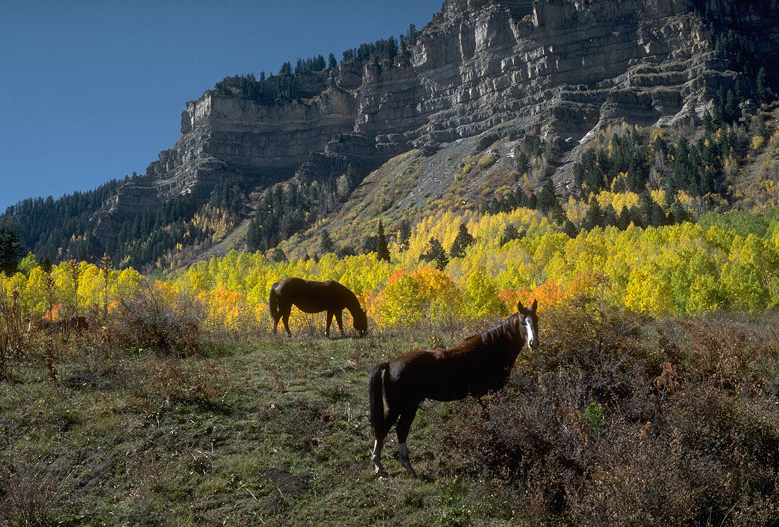 A pair of horses graze with rugged bluffs and golden trees looming in the distance.