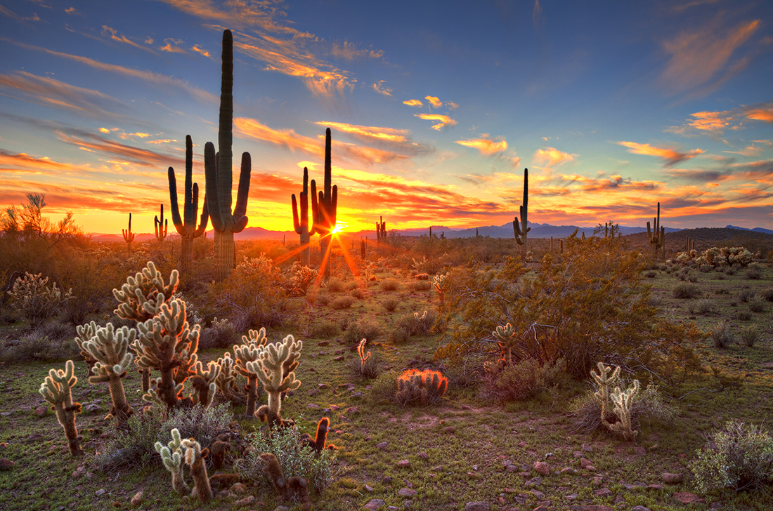 Cacti stand backlit by an orange-scarlet sunset.