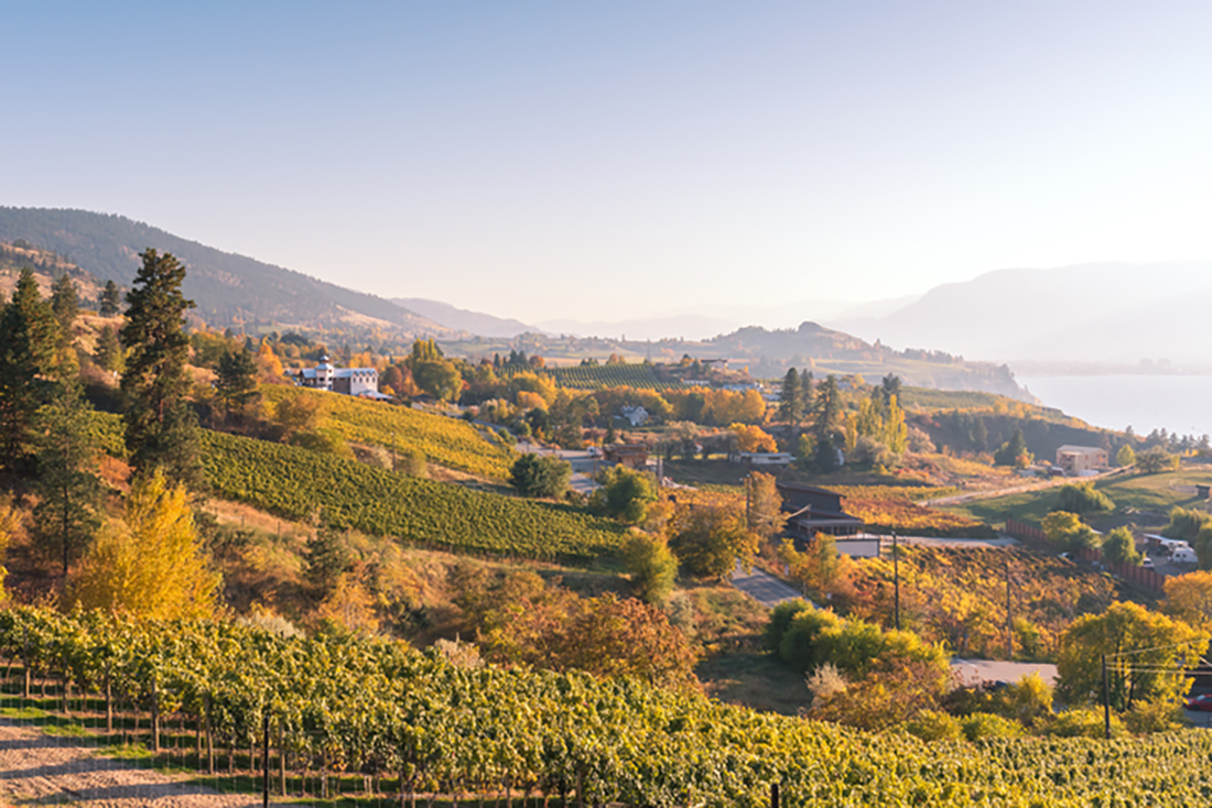 Dusk light bathes a slope with carpeted in vineyards and elegant houses as hills and a river loom in the background.