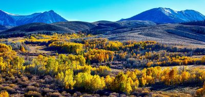 Groves of yellow aspen occupie rolling hills with mountains in the background.