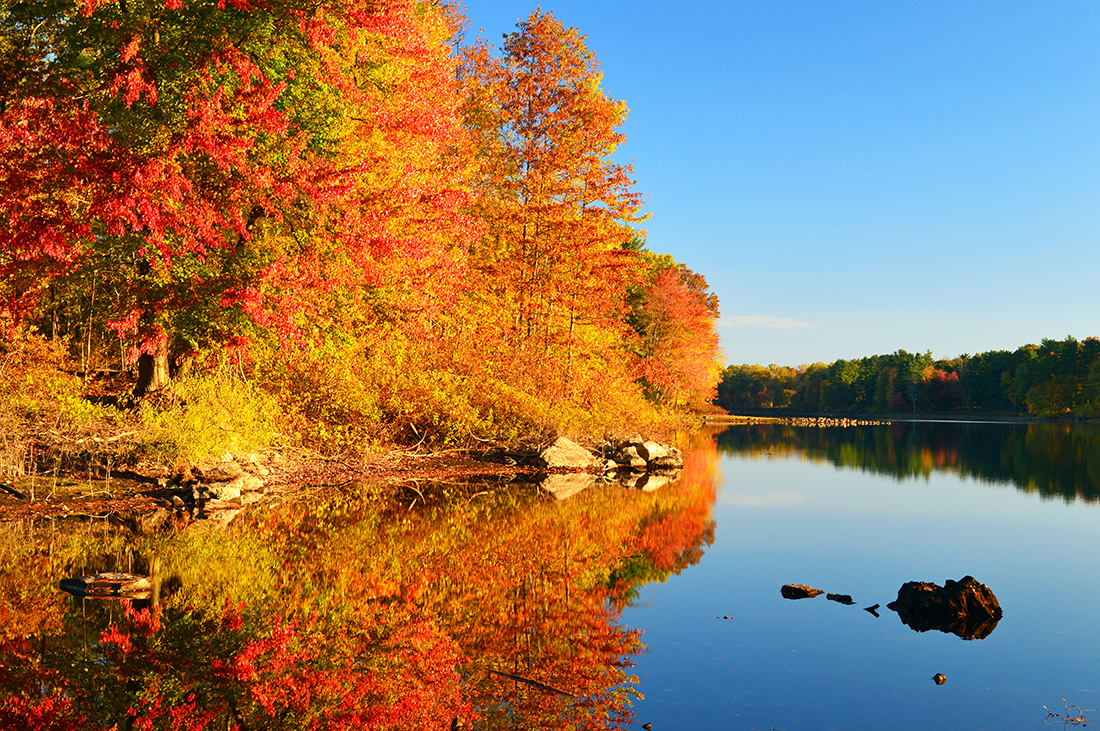 Golden fall foliage overlooking a clear, reflecting lake.