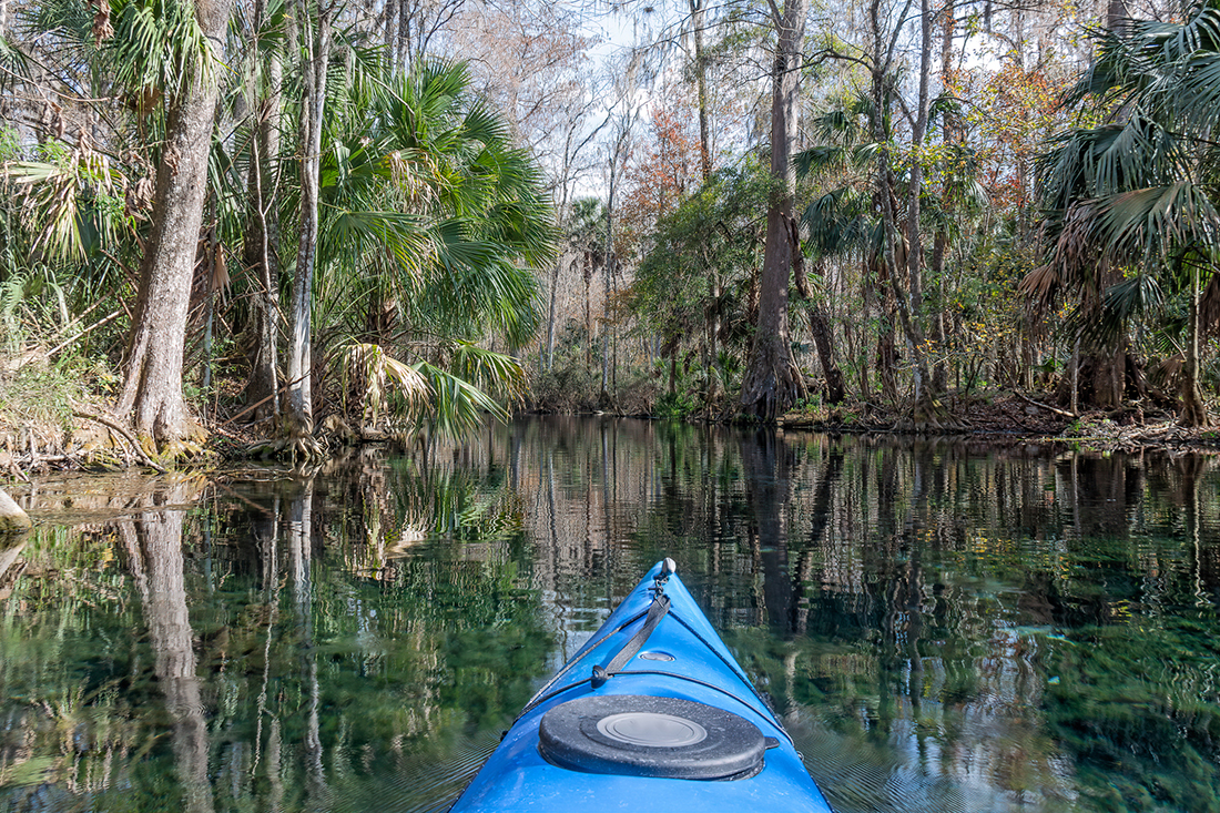 POV from the paddlers — a blue kayak noses through a swamp. Photo: Getty Images