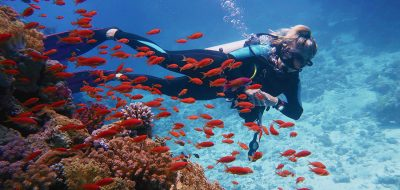 Scuba diving and snorkeling in Florida's Lower key A woman swims in a reef with lots of fish.