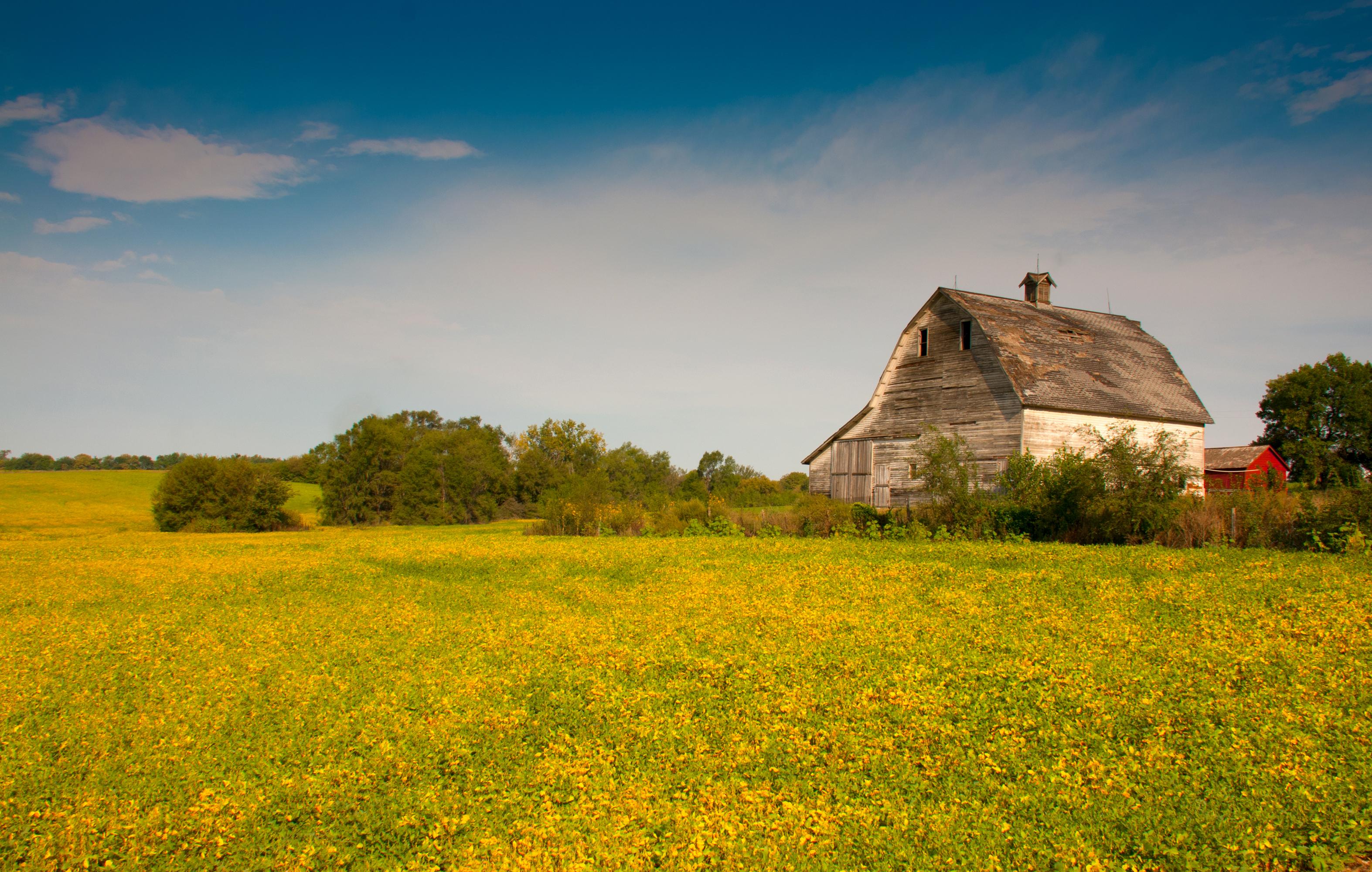 Barn in a Nebraska farm field.