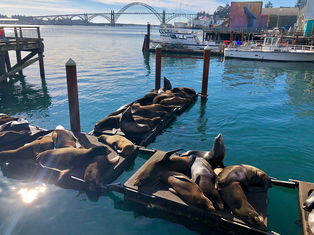 Seals lounge on a dock with arched steel bridge in the background.
