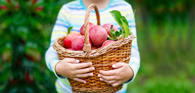 A child holds a basket of apples.