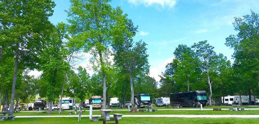 south brunswick islands north carolina —a grassy field with RVs right at the tree line.
