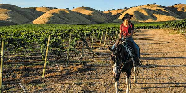 A woman in a red shirt and black hat goes horseback riding through one of SLO CAL's many vineyards.