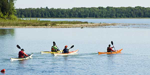 Four kayakers set out from a lake cove.