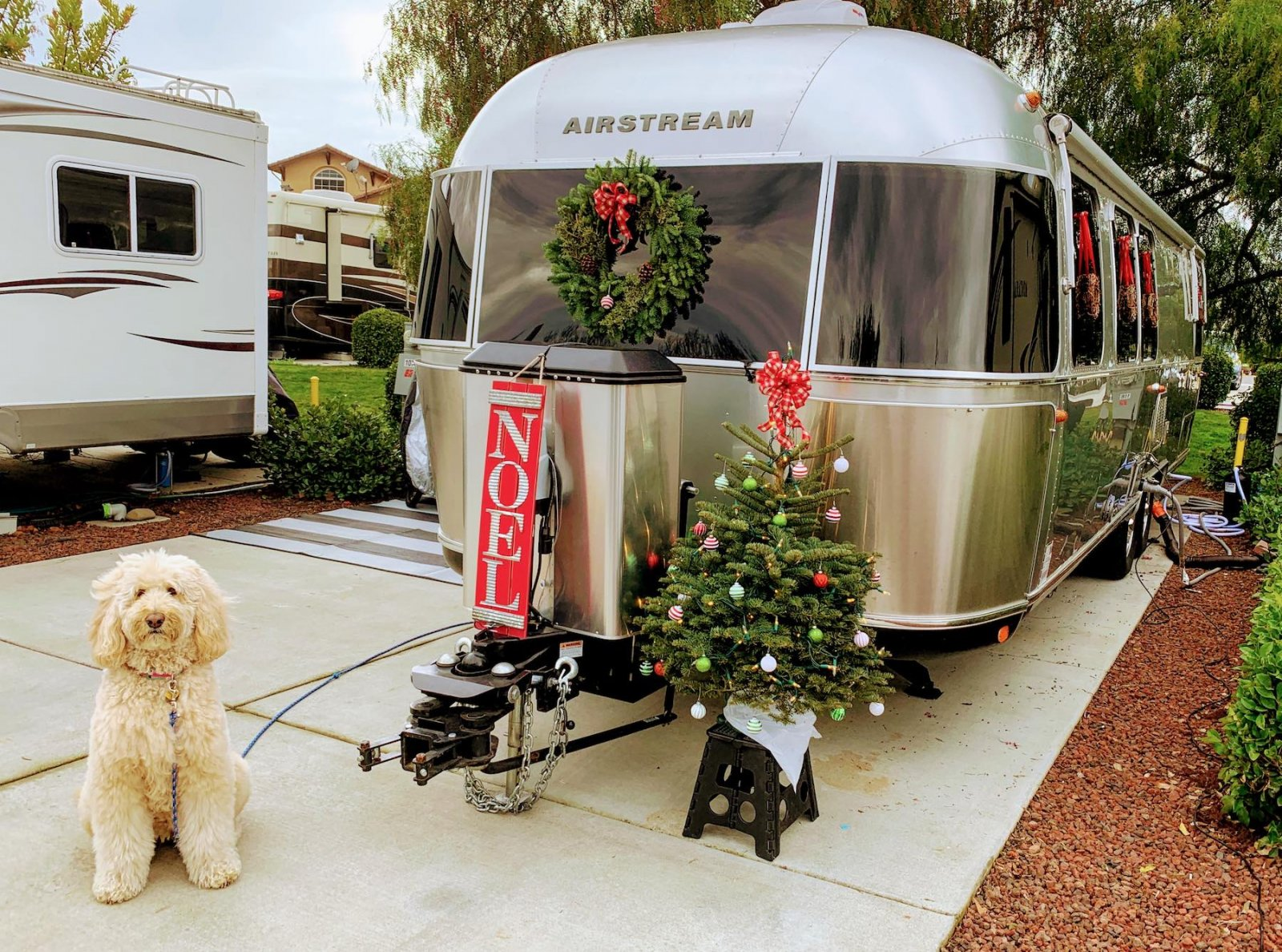 A furry dog sits patiently in front of an Airstream Trailer