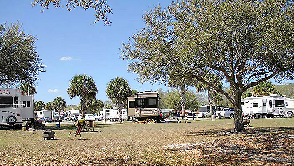 RVs parked on grassy sites with palm trees.