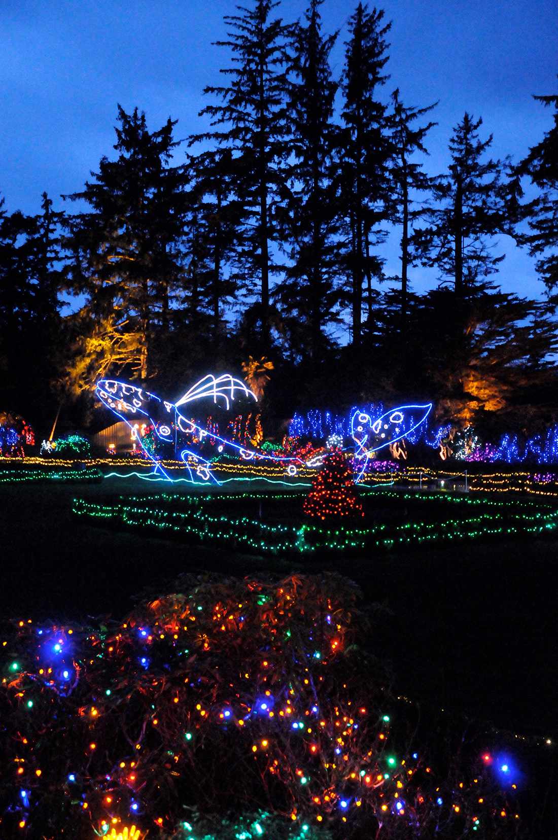 A light sculpture of a whale Bright holiday lights shining in the night.