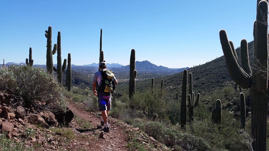 Hiking through Saguaro National Monument on a trail that threads through giant cacti.