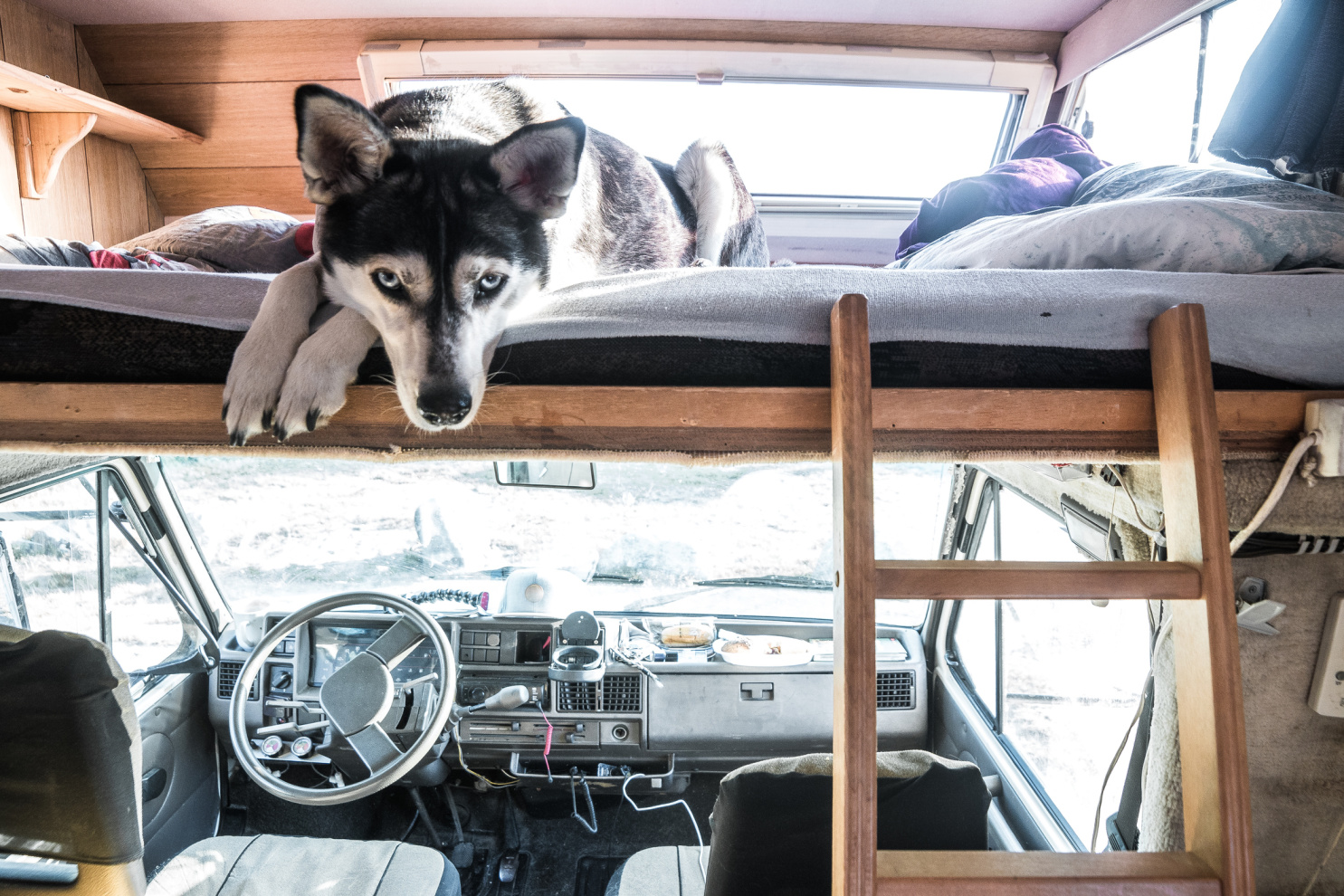 Cute black and white dog laying on RV bunk bed