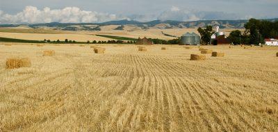 A beautiful golden field of wheat.