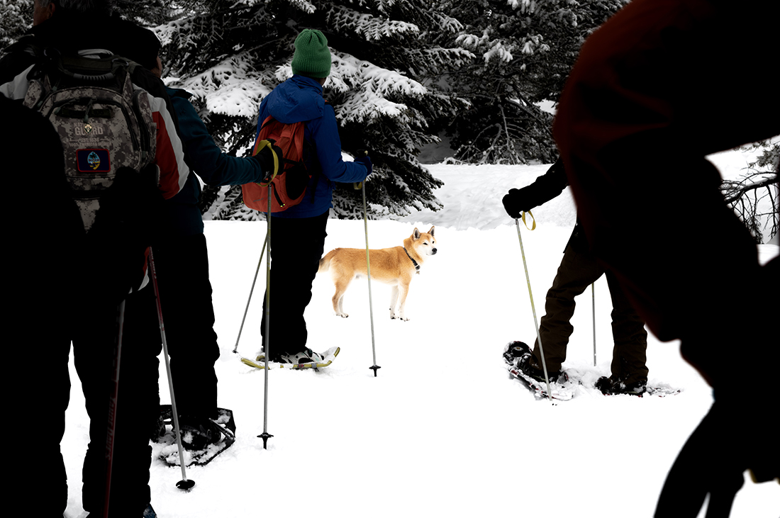 A group of skiiers gather around a dog.