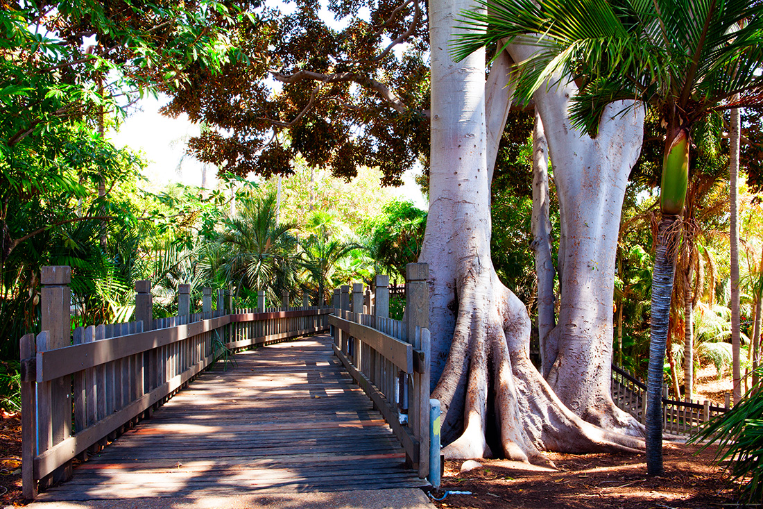 A wooden bridge leading to palm trees in Balboa Park.