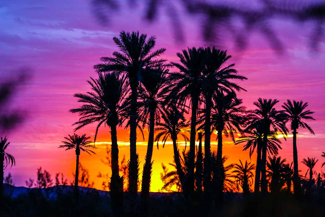 Beautiful desert sunset with palm trees