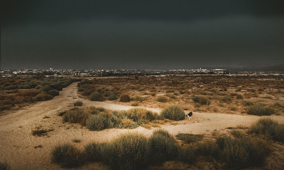 Sprawling landscape of Fiesta Island