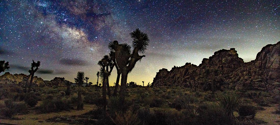 Joshua trees under a starry sky.