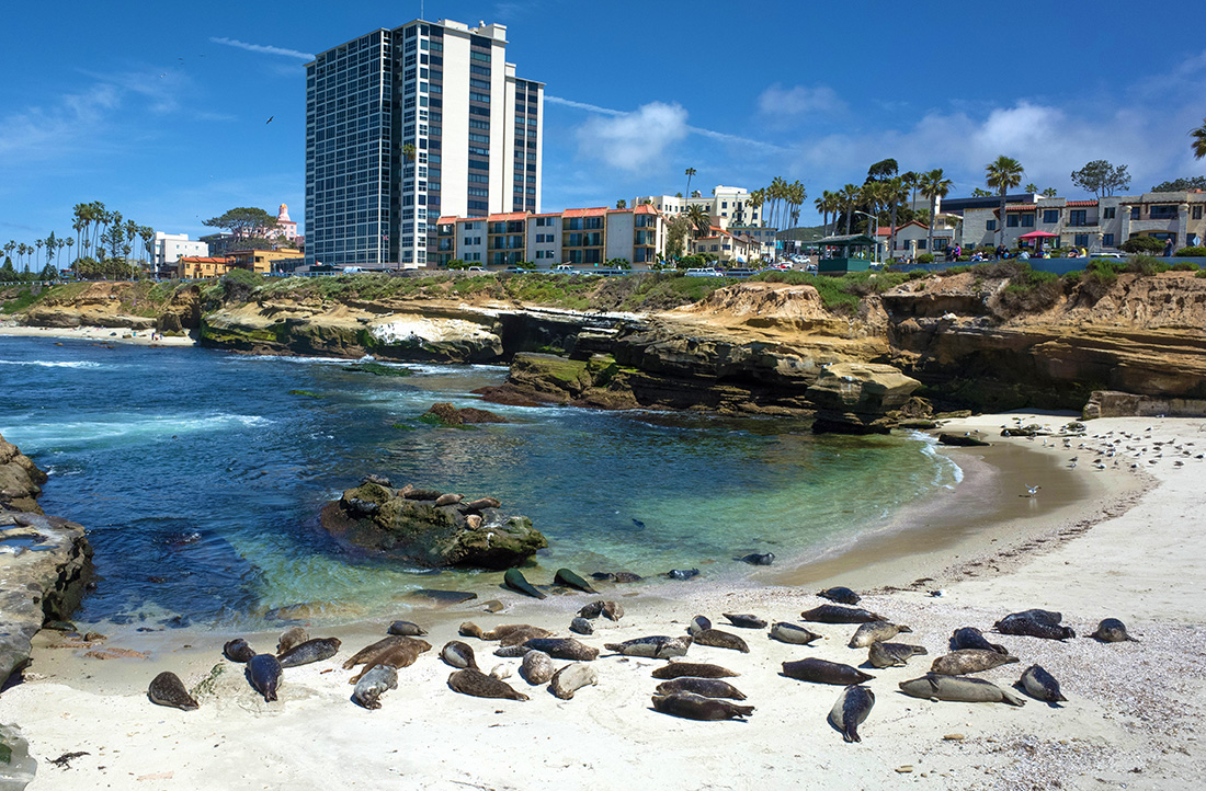 A beach with clear blue water and resting sea lions.