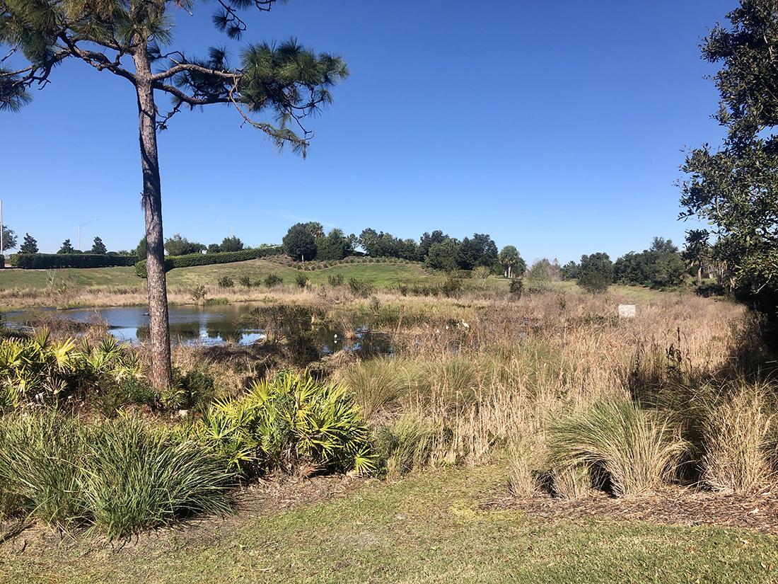 A wetlands area in Florida
