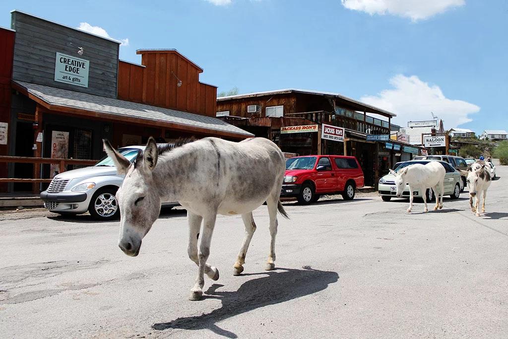 A burro ambles down a dirt street.