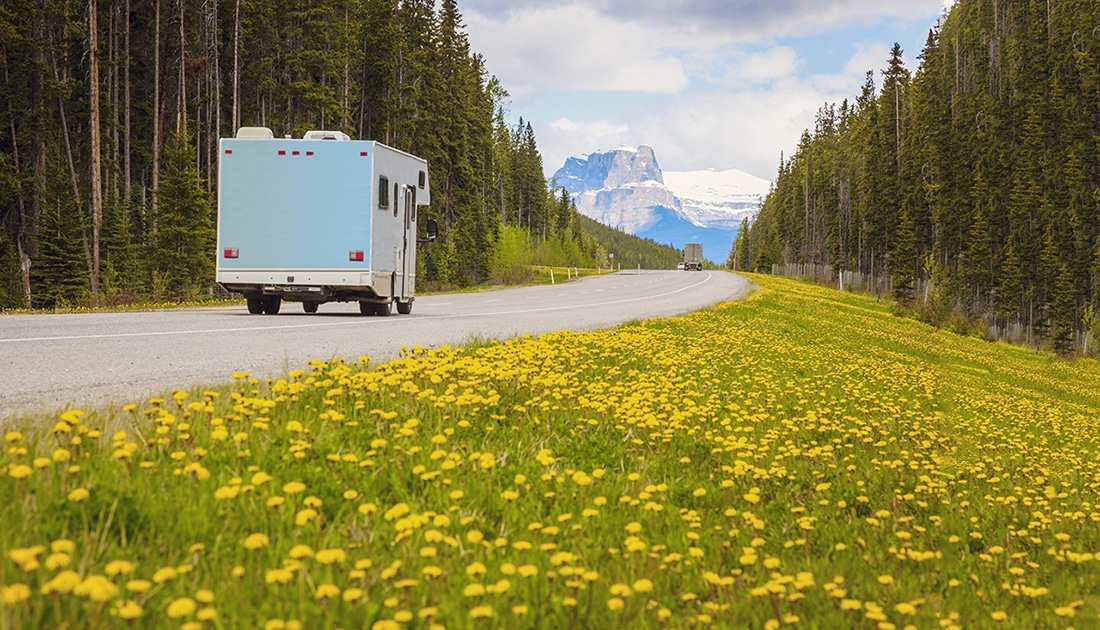 A motorhome cruises past a roadside that bursts with flowers.