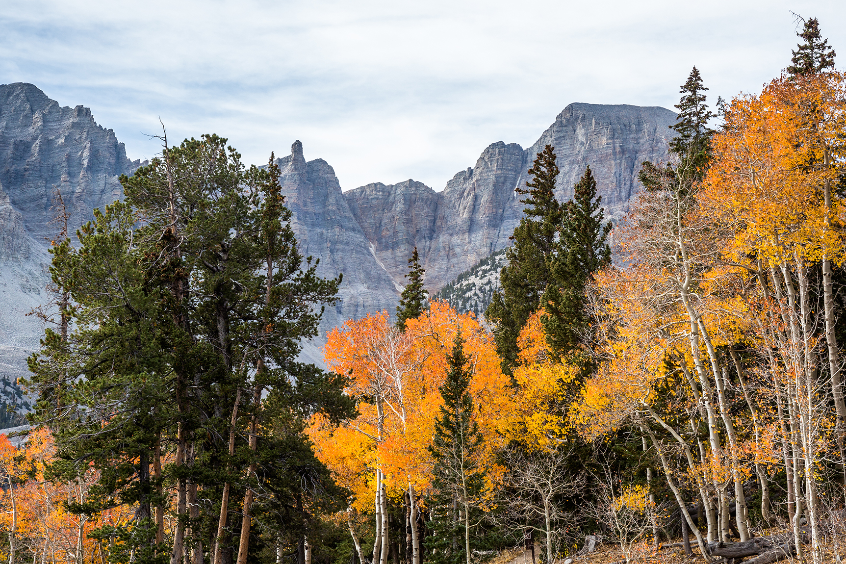 Thirteen-thousand-foot Wheeler Peak is visible over changing orange and yellow autumn leaves.