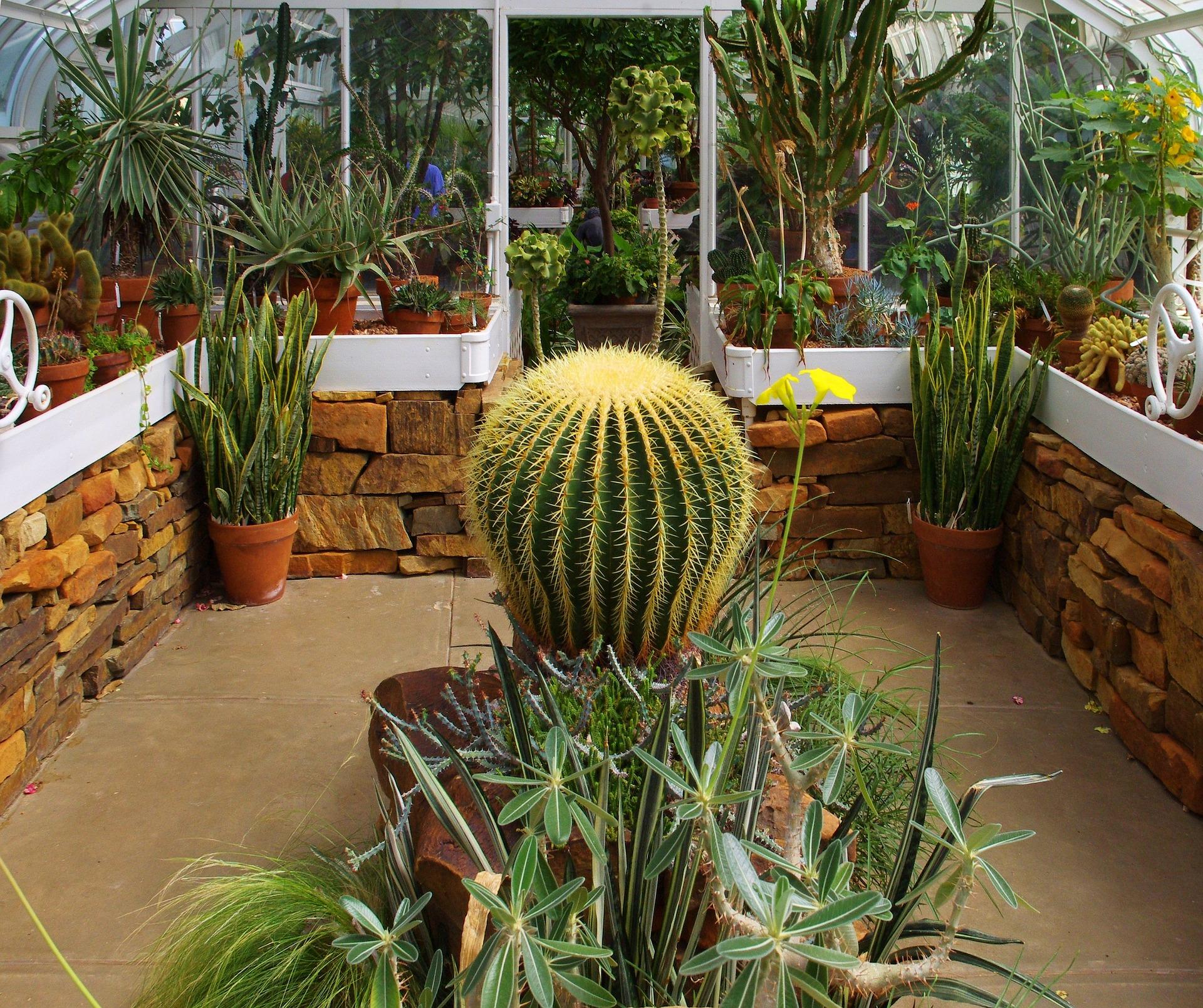 A bulbous cactus in a courtyard.