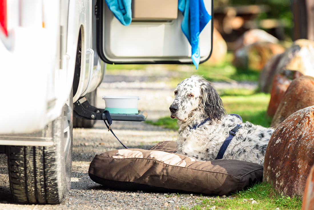 A dog await outside of an RV door with tether and water.