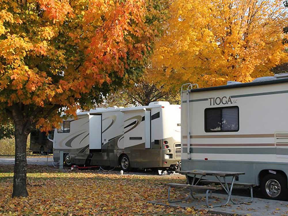 RVs under golden leaves at River Plantation RV Resort.