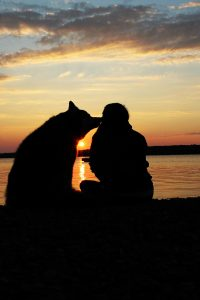 A camper watches sunset with dog friend.