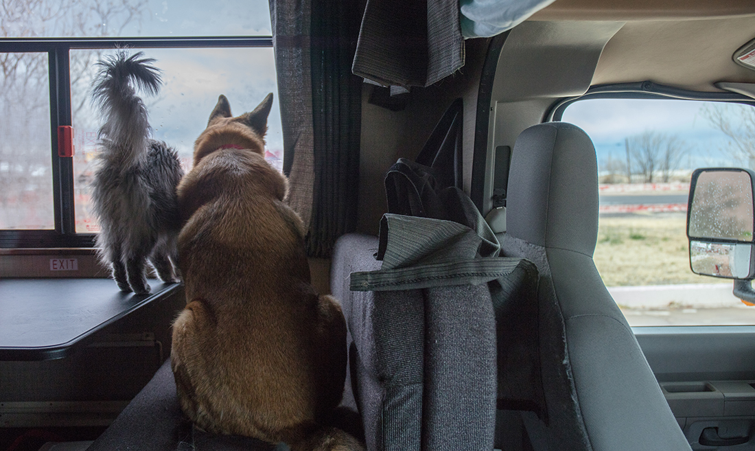 A dog and cat observe rain through an RV window.