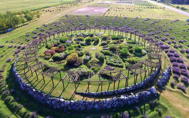 Aerial view of lavender farm