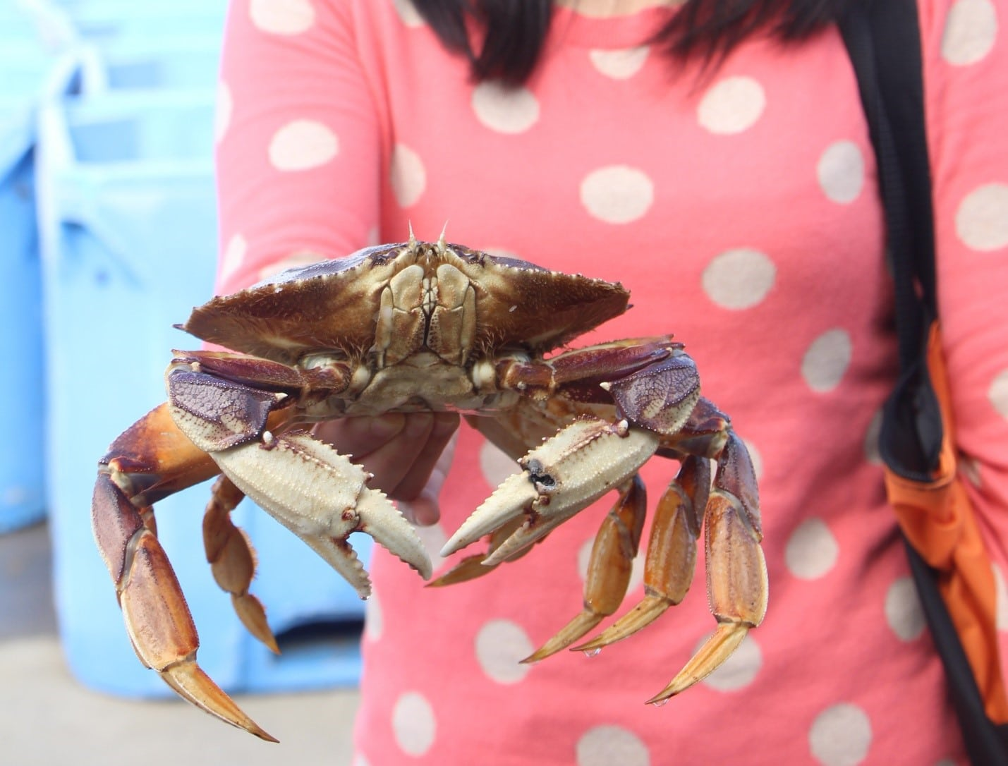 Woman holding a hefty crab