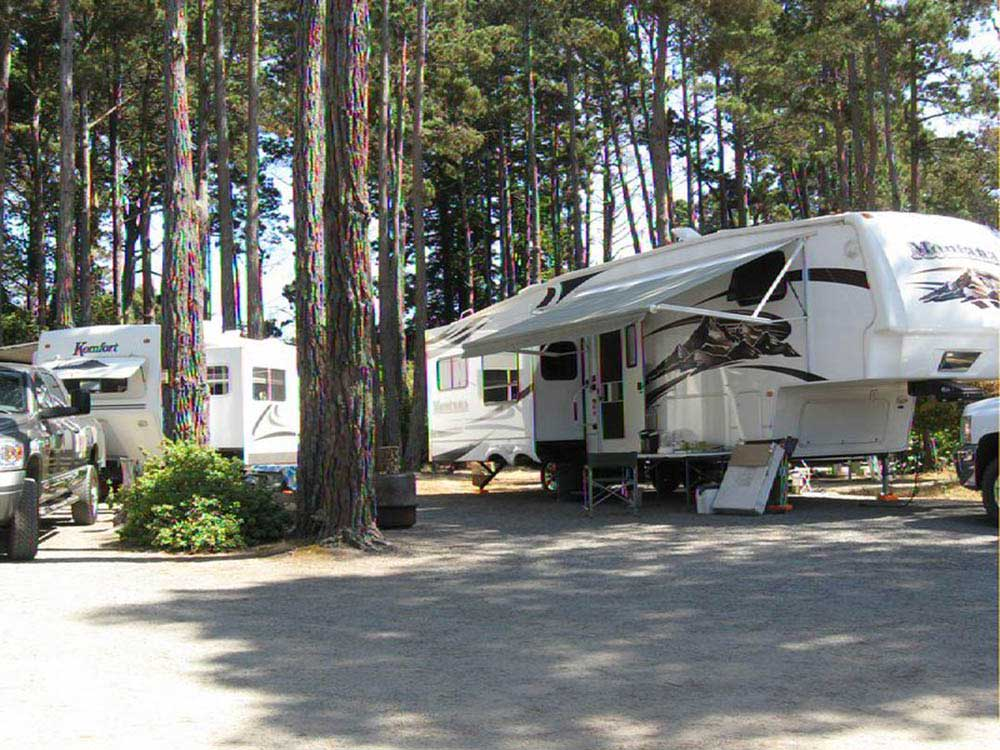 RV trailers parked under trees.