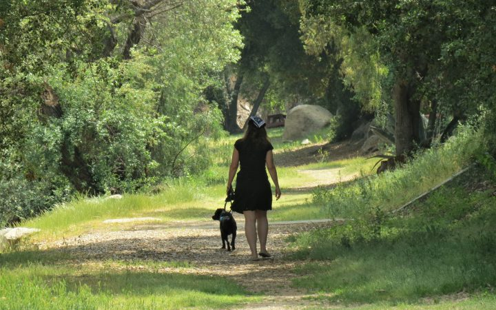 A woman walks her dog on a forest trail