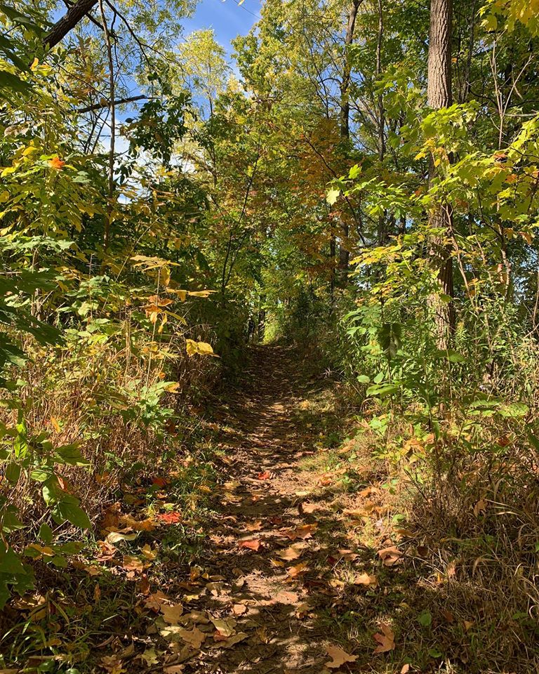 A trail leads into a wooded area.