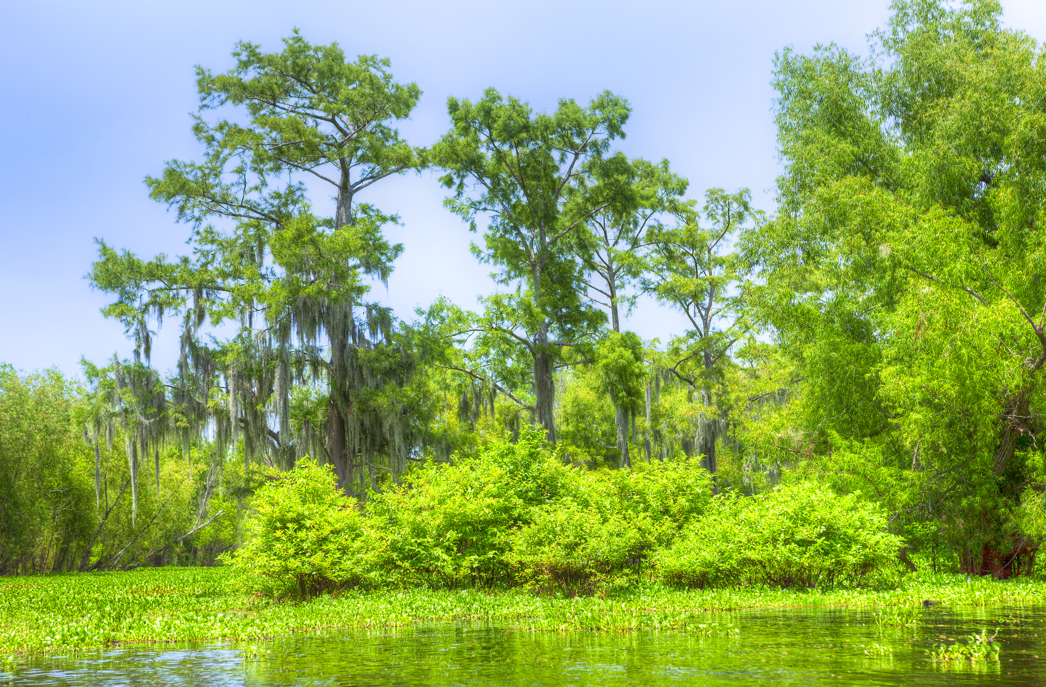 Swamp with vivid green trees