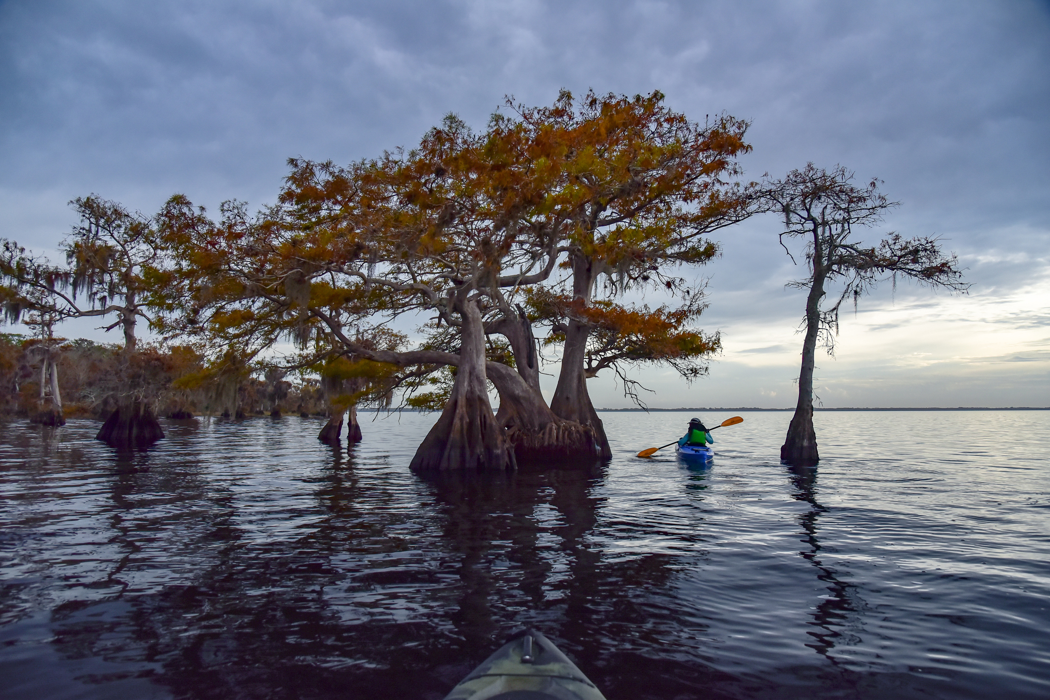 A kayak paddles near trees.