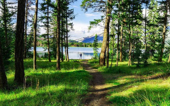 Trail leading through a forest to a lake.