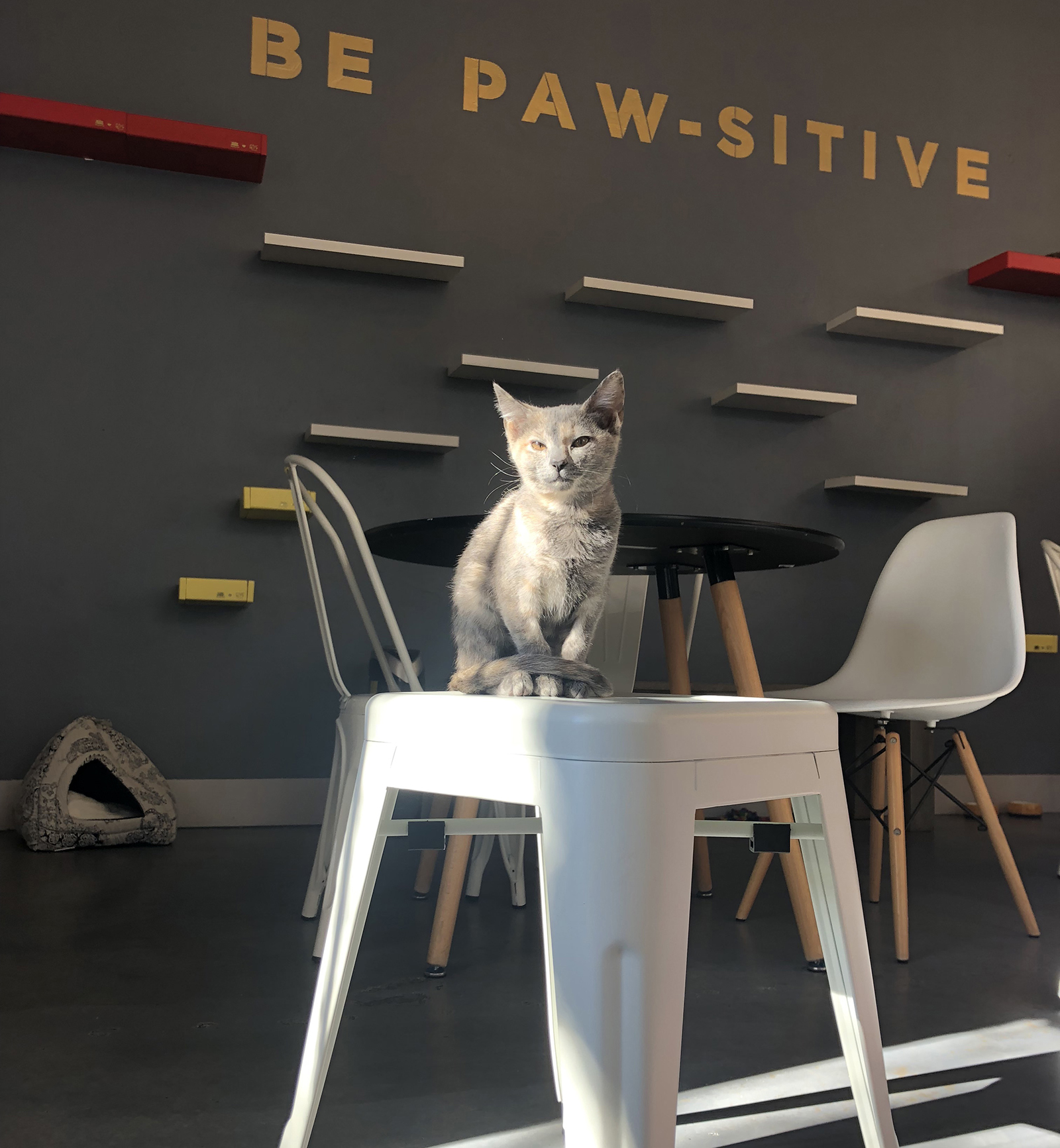 A cat perched on a stool at a cafe.